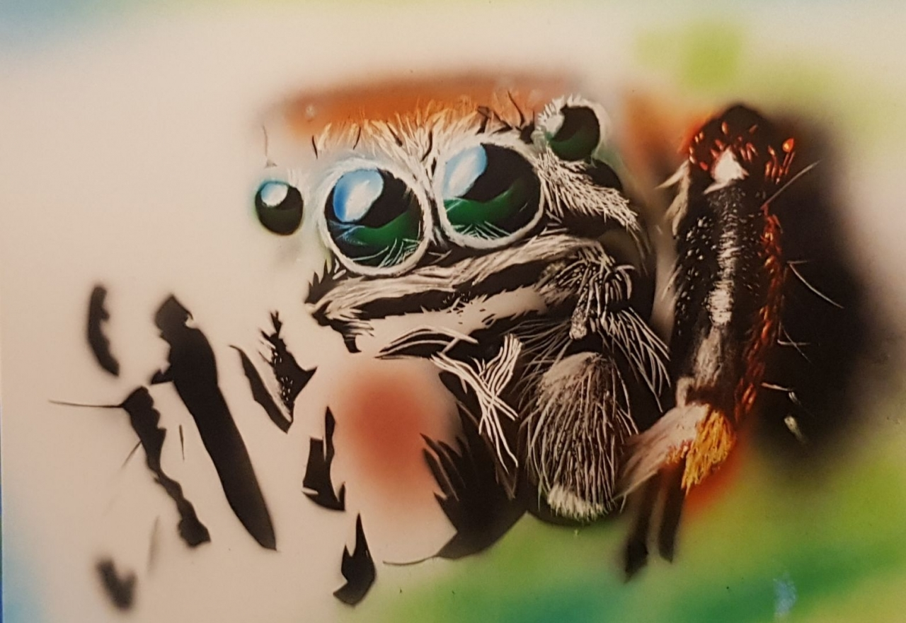 Cute jumping spider WIP