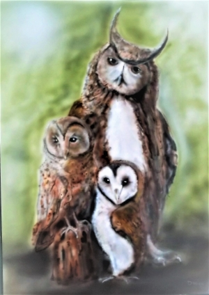 Owls three