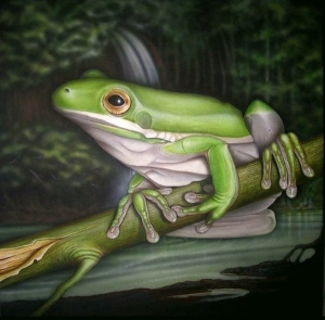 White Lipped Frog